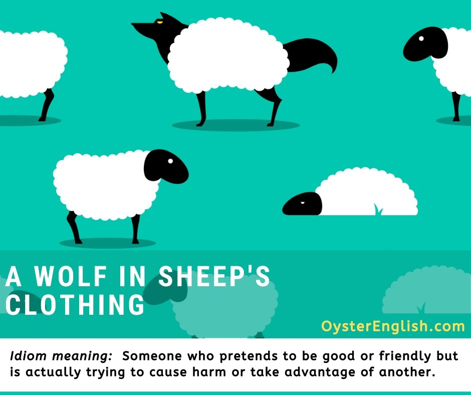 An illustration of a group of white sheep grazing in a field but one is actually a wolf dressed in sheep's clothing.