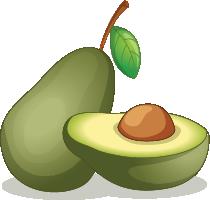 Illustration of an avocado
