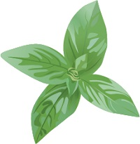 illustration of fresh basil