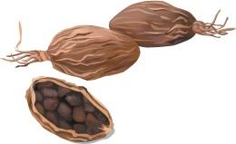 how to grow black cardamom