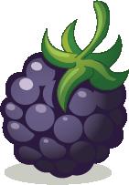 Illustration of a blackberry