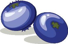Illustration of blueberries