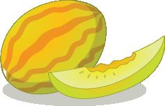 Illustration of a cantaloupe
