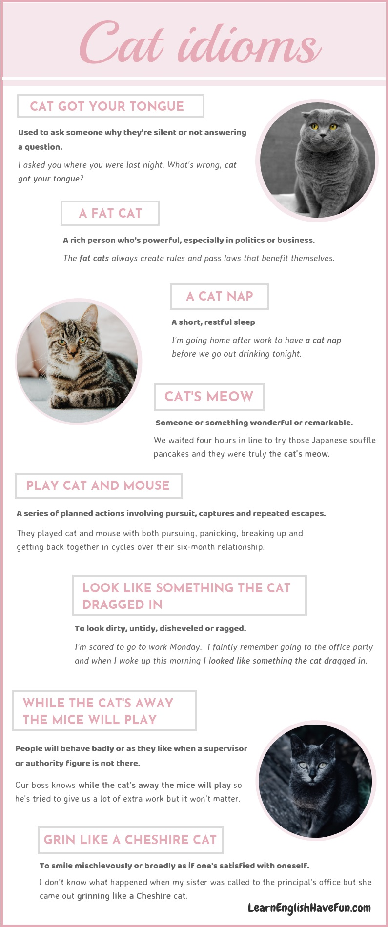 An info-graphic with 3 photos of cats and the 8 idioms listed on this page with sentence examples.