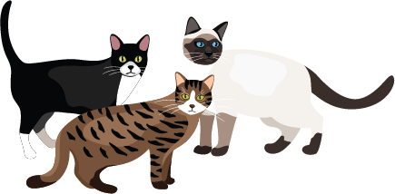 Illustration of 3 different kinds of cats