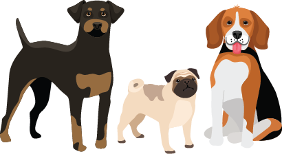 Illustration of 3 dogs: a pug, a beagle and a doberman