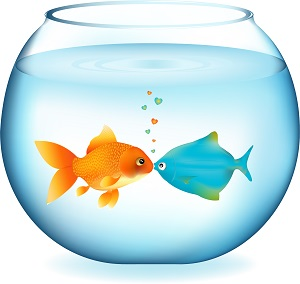 Illustration of a fishbowl containing two fish