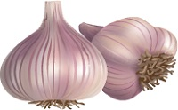 illustration of garlic cloves