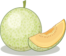 Illustration of a honeydew melon