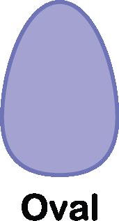 illustration of an oval shape