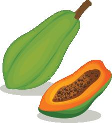 Illustration of a papaya