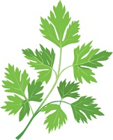 illustration of a sprig of parsley