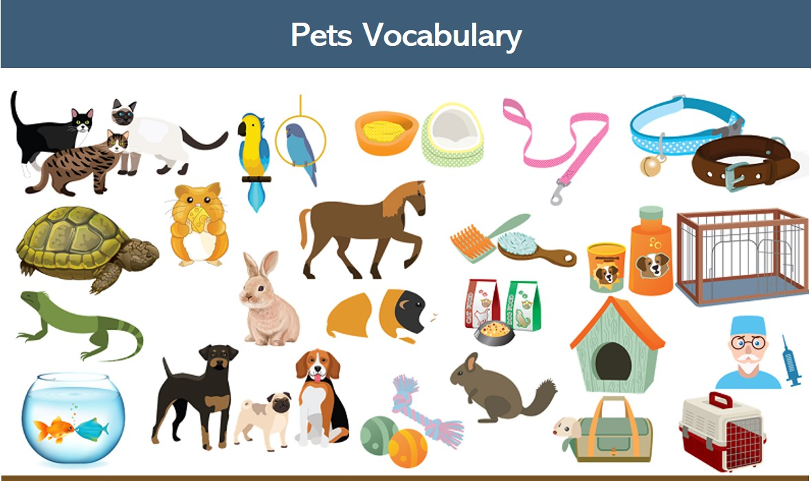 A collage of all of the images of the animals and pet supplies listed on this page.