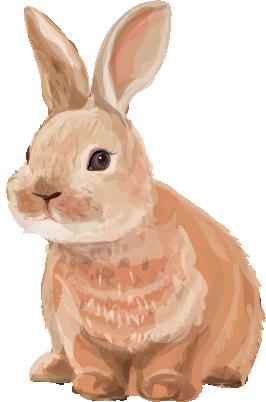 illustration of a rabbit