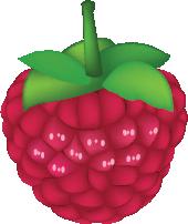 Illustration of a raspberry