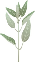 illustration of as sprig of sage