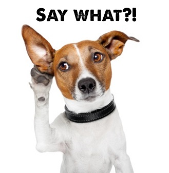 A white and brown Jack Russell dog cupping his ear as if listening. Captioned