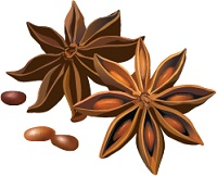illustration of star anise