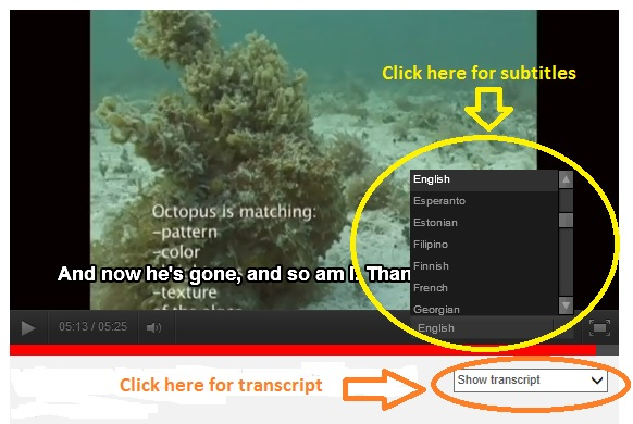 Screenshot showing how to access the subtitles on the YouTube video and display them in English as well as other languages.