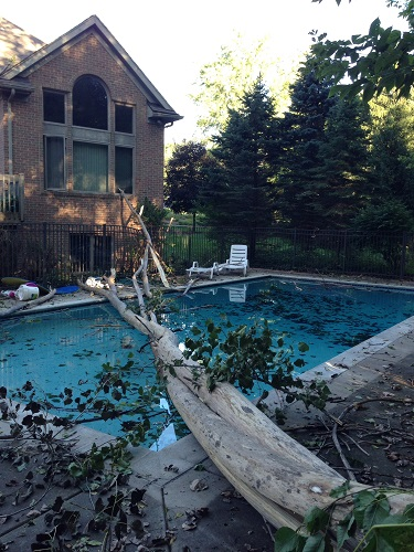 Picture of a home and a huge tree that's fallen in the backyard pool.