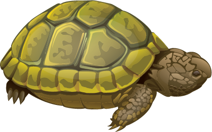 Illustration of a turtle