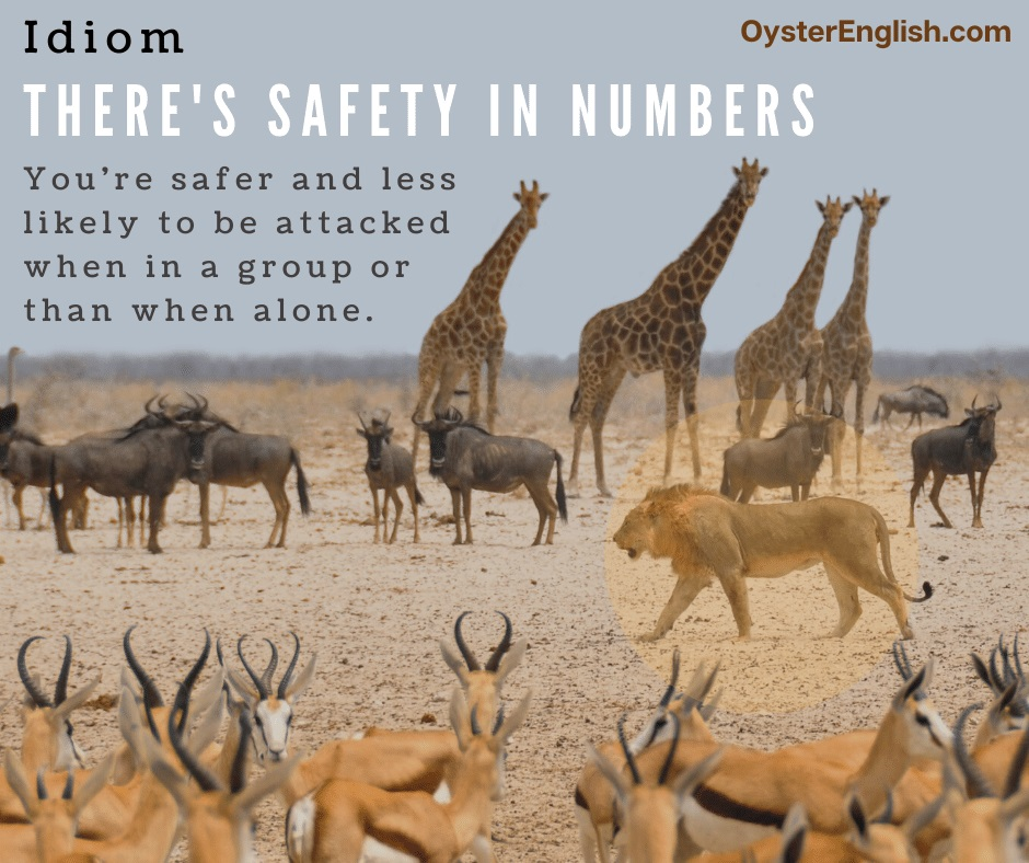 A lion walks through herds of various herds illustrating the idea that there's safety in numbers and any single animal is less likely to be attacked with other animals in the crowd.